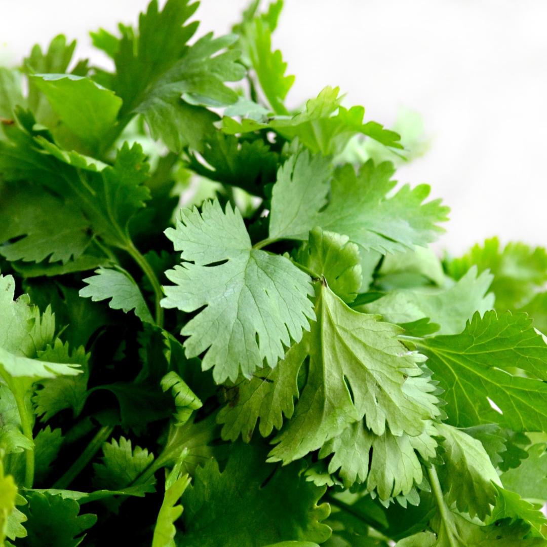 A photo of cilantro for Ayurvedic Spring chutney